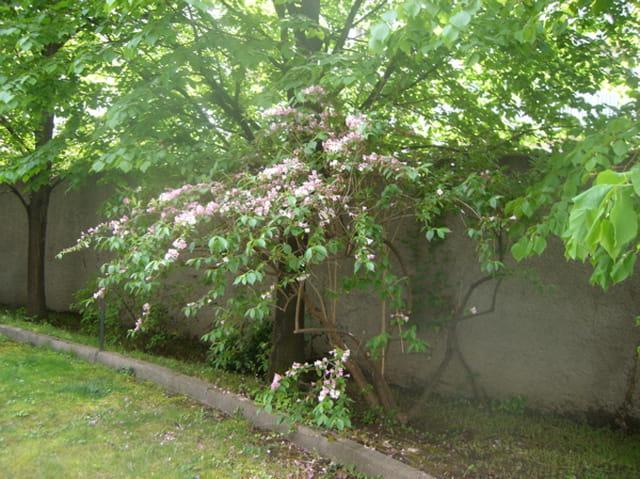 Agréable jardin