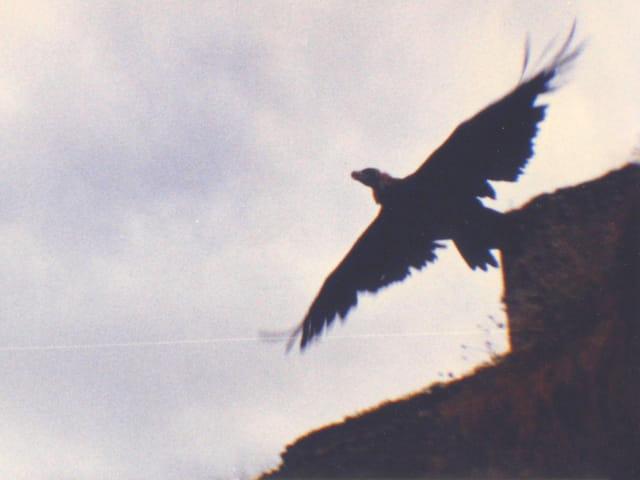 Aigle qui prend son envol
