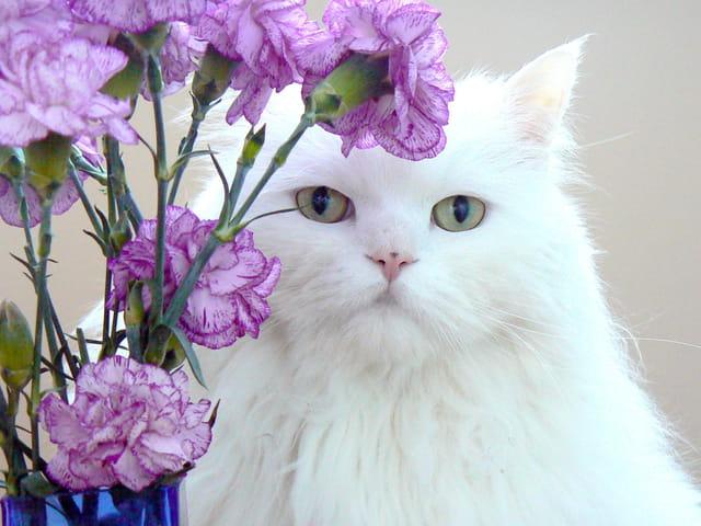 Alex m'offre des fleurs