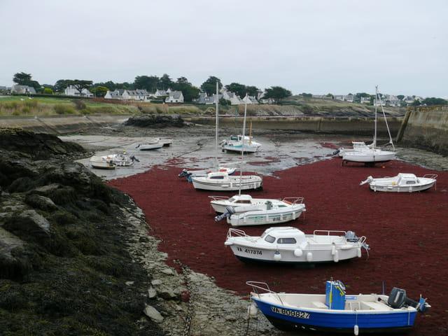 Algues rouges par bernard leborgne sur l 39 internaute for Algue rouge piscine