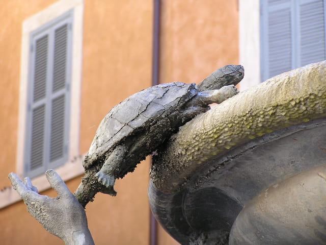Allez tortue, grimpe !