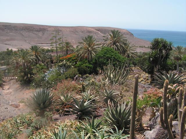 Aloé  véra et autres cactus