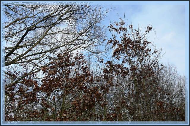 Alors, que je marchais, dans le silence de la forêt, soudain j'entendis un bruit ...