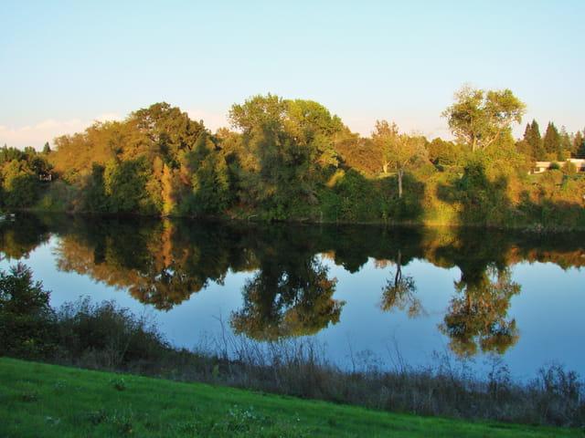 American River: reflets