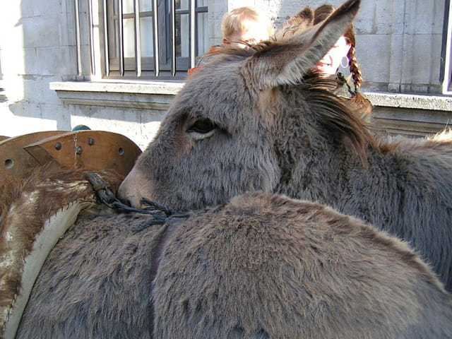 Amour d'âne