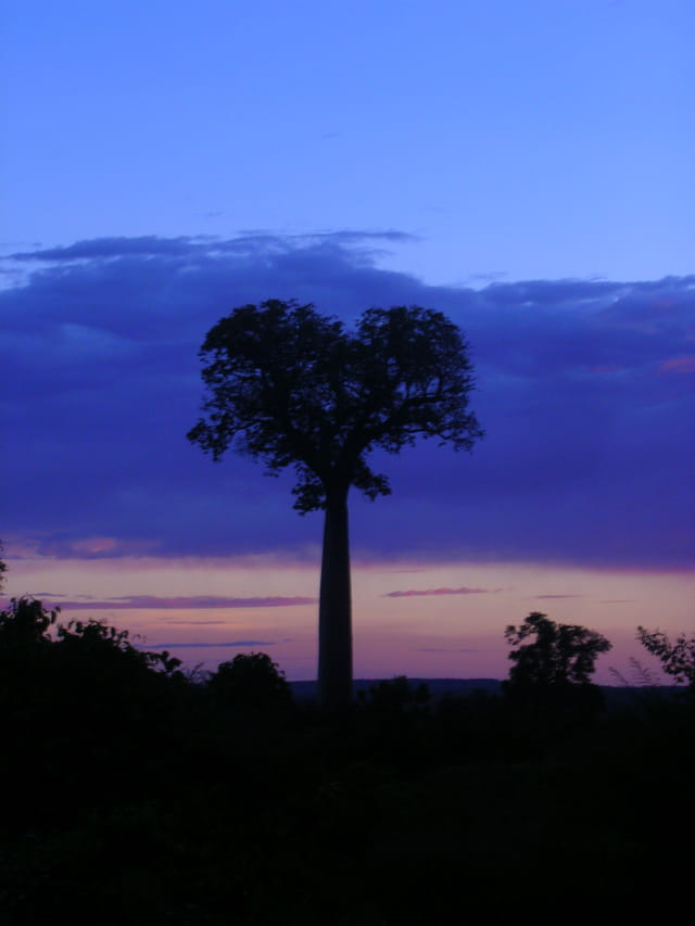 Amour malgache