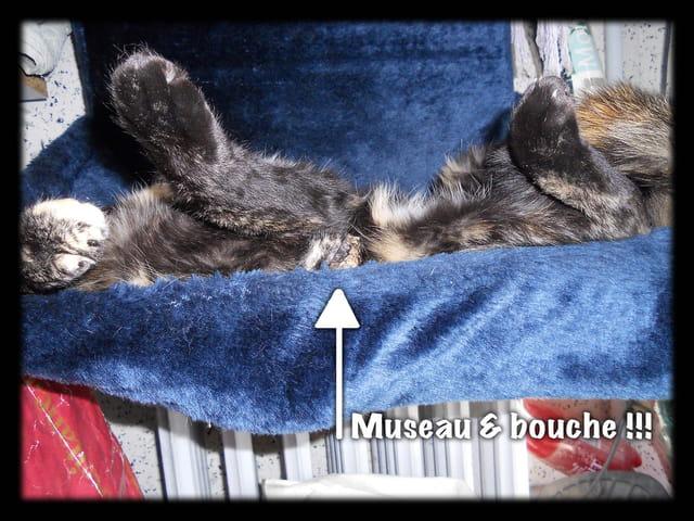 Animaux 04 � Chutttt, une chatte qui dort