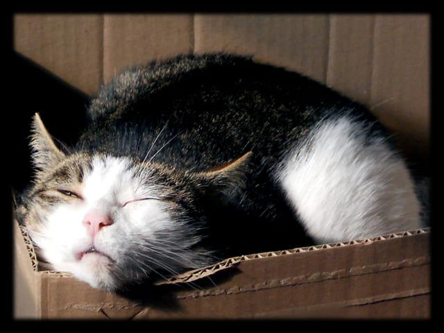 Animaux 22 � Chutttt, un chat qui dort