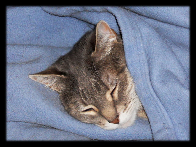 Animaux 23 � Chutttt, une chatte qui dort