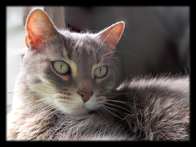 Animaux 26 � Regard de chatte