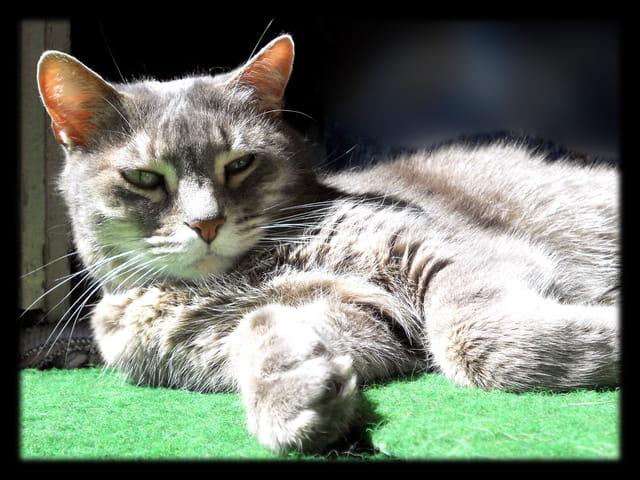 Animaux 27 � Regard de chatte