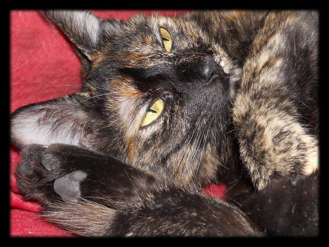 Animaux 29 � Regard de chatte