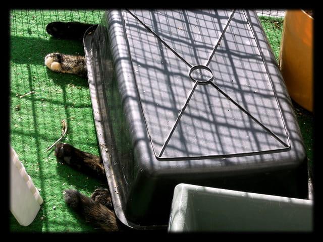 Animaux 30 � Une chatte s�est cachée