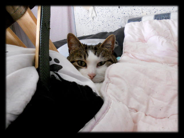 Animaux 38 � Chat caché