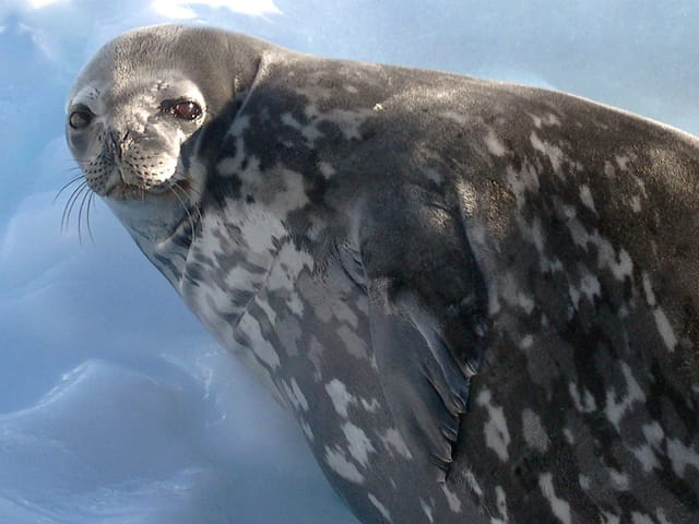 Antarctique 17
