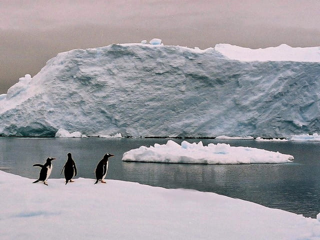 Antarctique 49