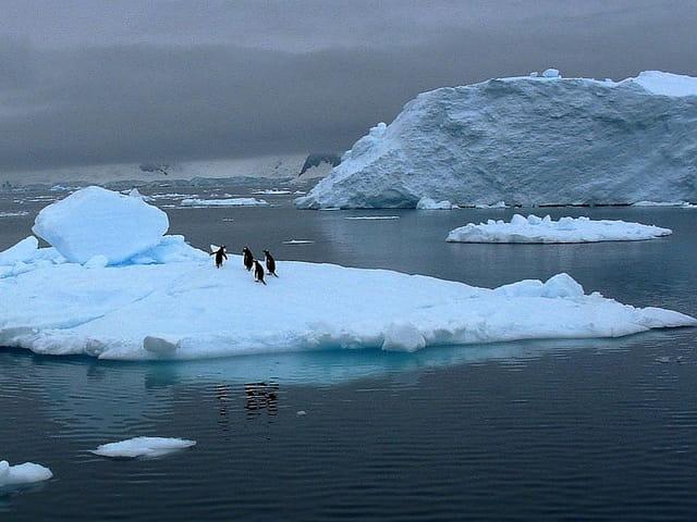 Antarctique 62