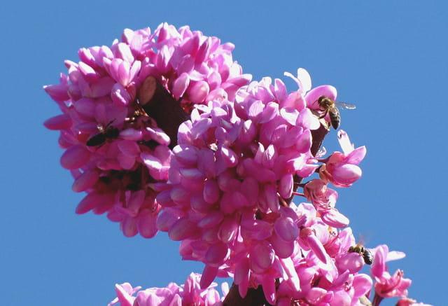 Apprécié des abeilles !