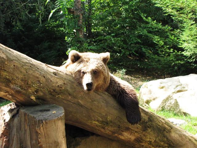 Après le bain, j'aime bien paresser au soleil!