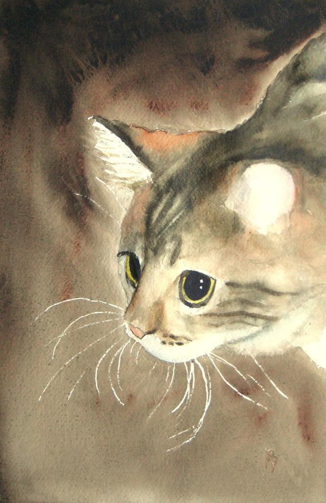 Moteur de recherche de chatte