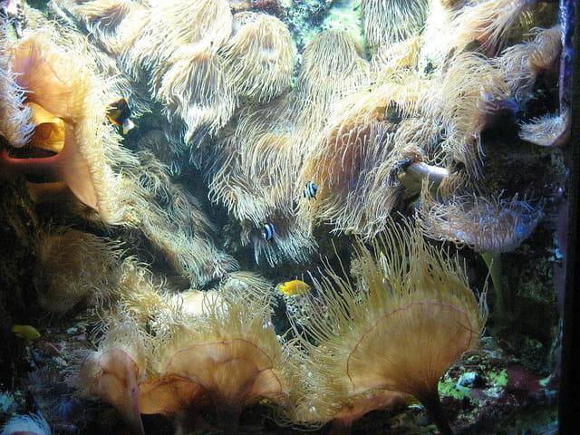 Aquarium de saint malo 001