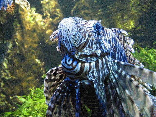Aquarium de saint malo 002