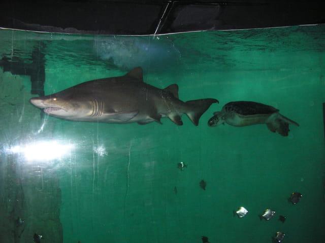 Aquariums de Saint Malo