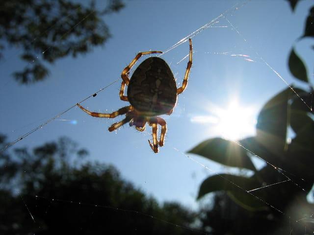 Araignée et soleil du soir