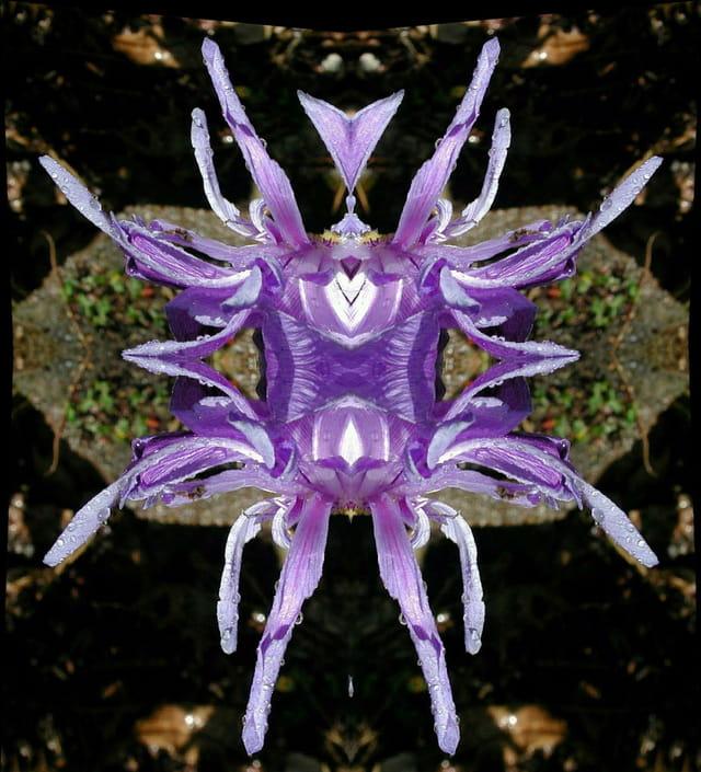 Araignée fleur bleue