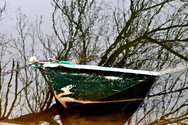 Arbre à barque