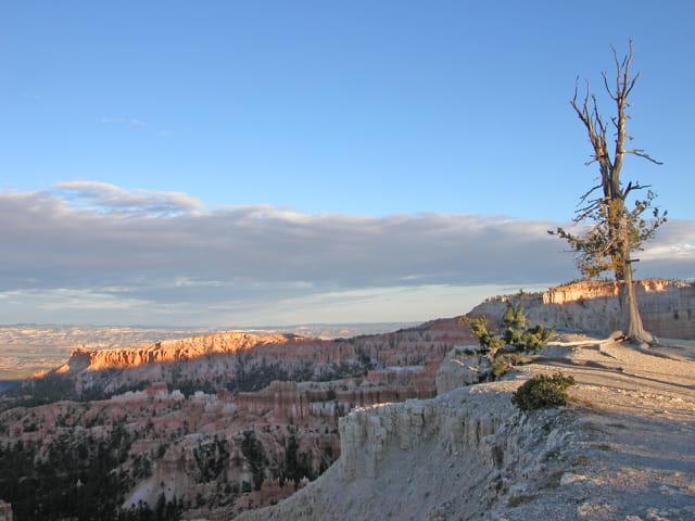 Arbre à bryce canyon