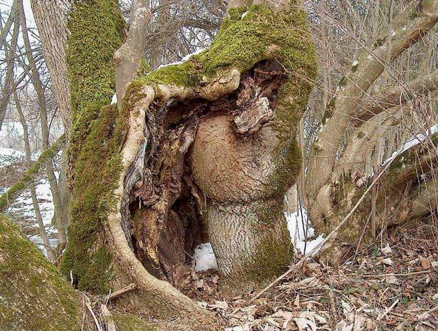 Arbre-champignon