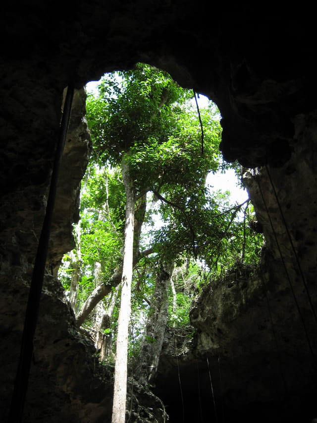 Arbre dans une grotte