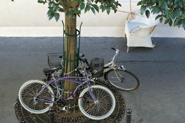 Arbre et vélo