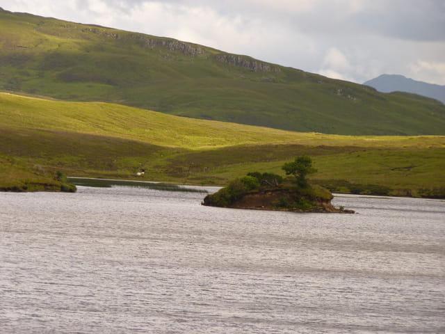 Arbre - île