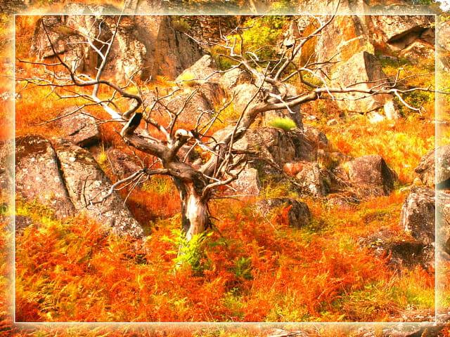 Arbre, roches et fougères