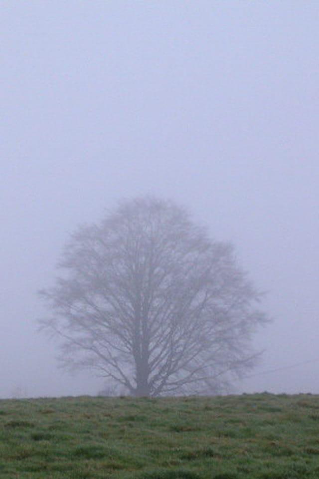 Arbre sortant de la brume