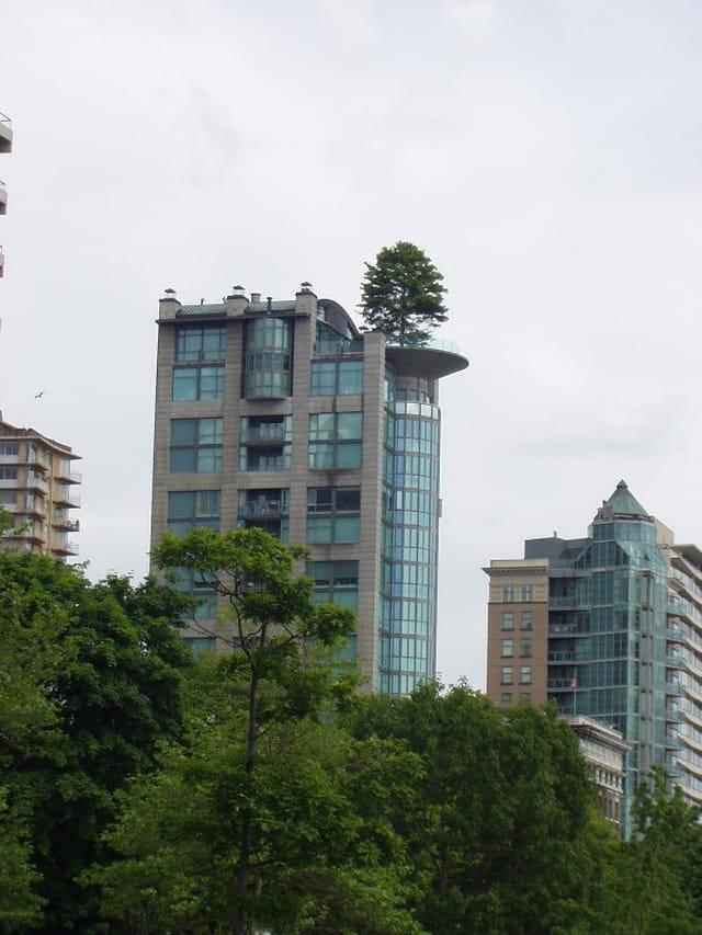 Arbre sur toit immeuble