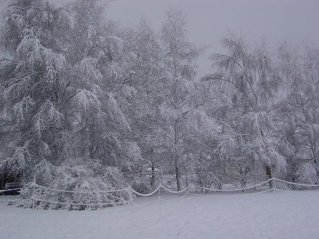 Arbres à neige