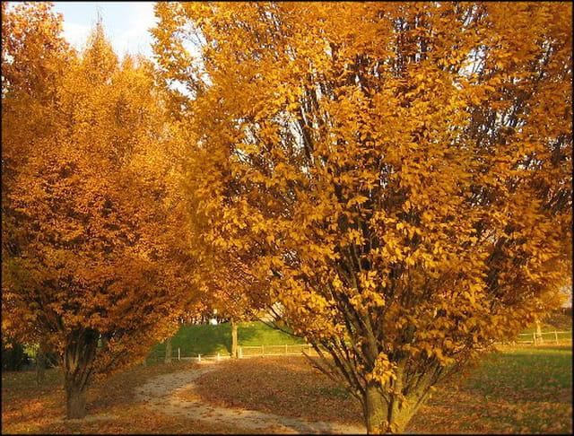 Arbres aux couleurs d'automne