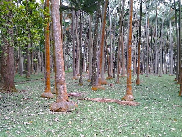 Arbres,Forêt,Sous bois (2)