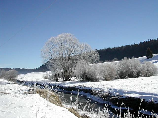 Arbres givrés au bord de la rivière