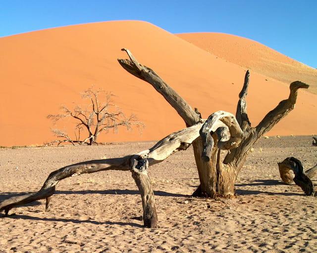 Arbres morts devant la dune 45