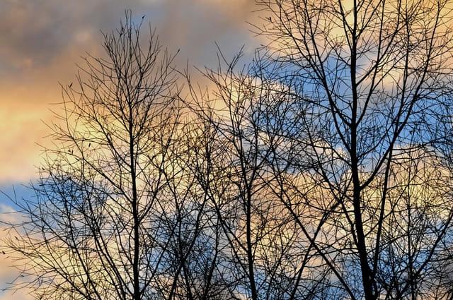arbres sans feuille