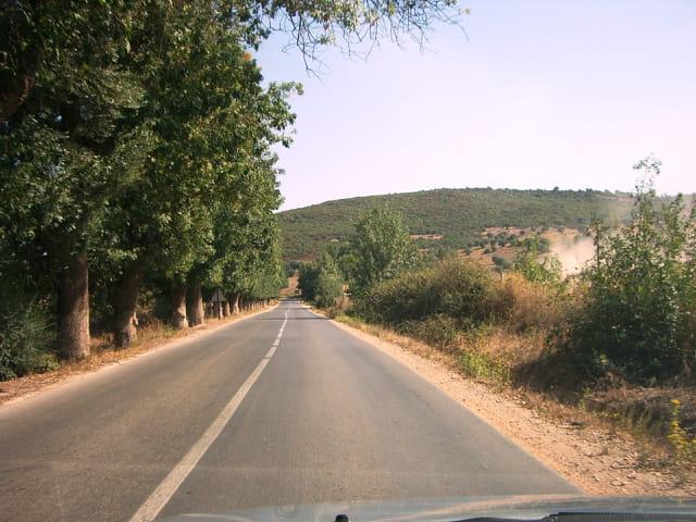 Arbres sur route ESSEBT vers AZZABA en Algérie 2011