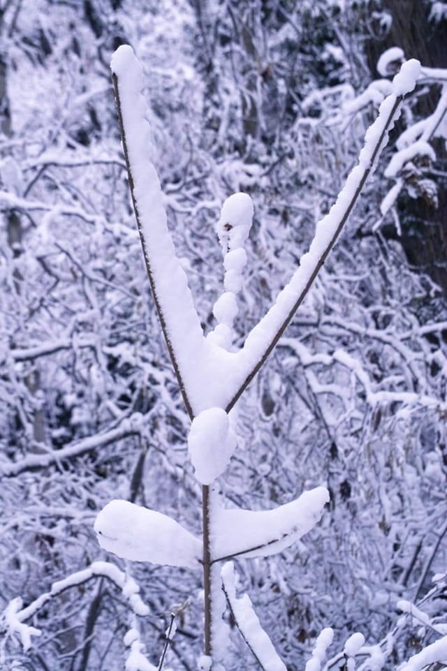 Arbuste enneigé