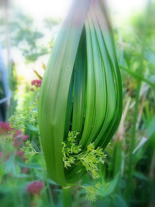 Art floral dans la nature