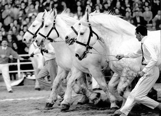Atelage de chevaux