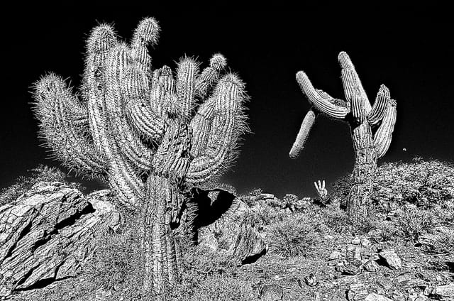 Attention, cactus.