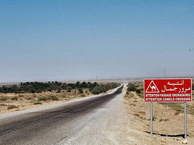 Attention chameaux